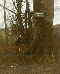 The Wishing Tree in the early 1980s