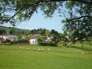 Kenn view with sheep